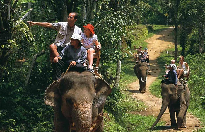 Elephant Safari provinces in India