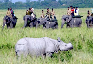 National Parks of Assam Tour