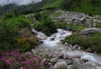 Valley of Flowers - Hemkund Trek